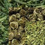 виды и сорта зеленого чая
